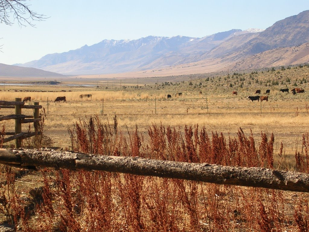 Oregon Ranchers Protect Sagebrush Habitat & Greater Sage-grouse